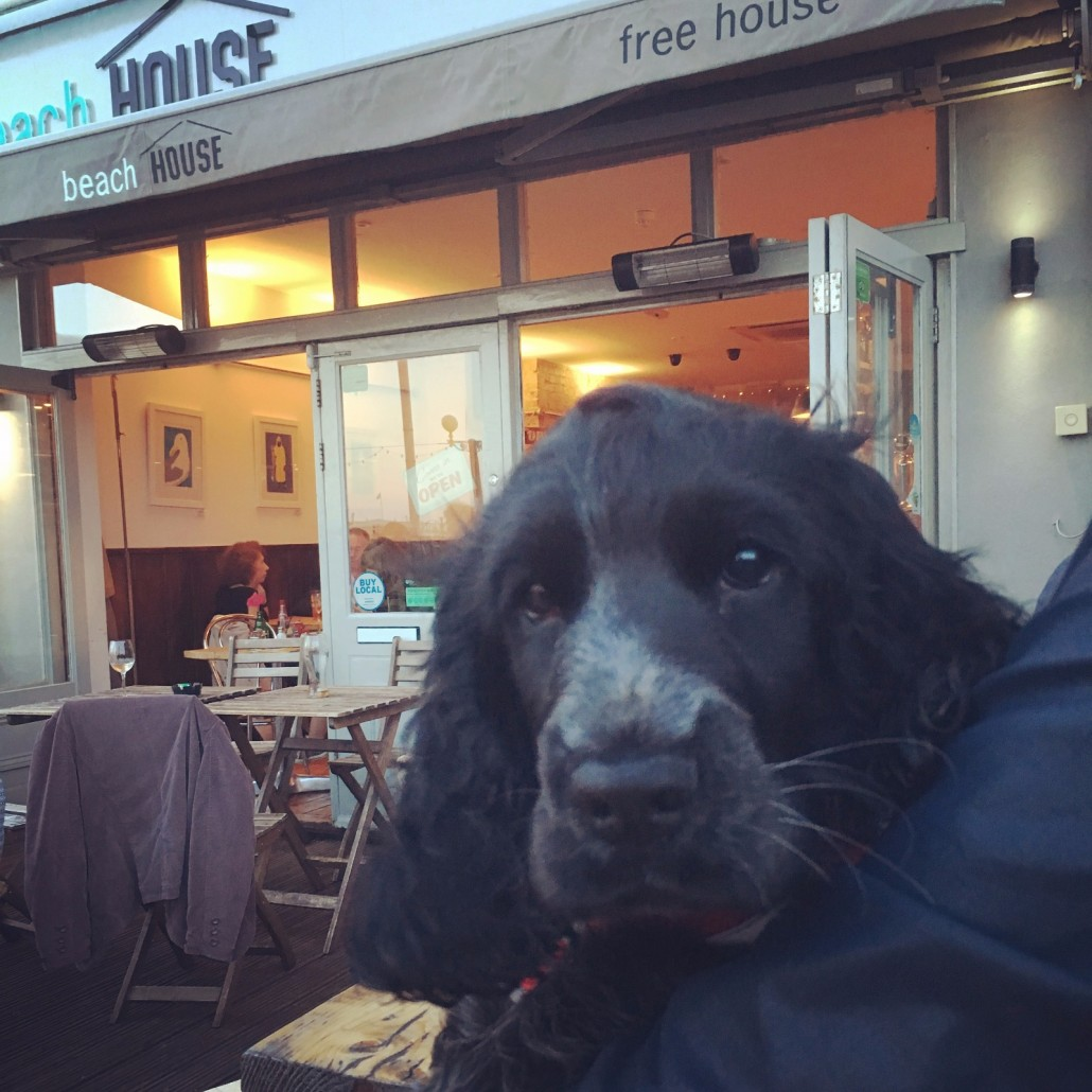 dog friendly bar in Worthing